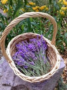 DIY, crafts, herbs, Lavender Oil