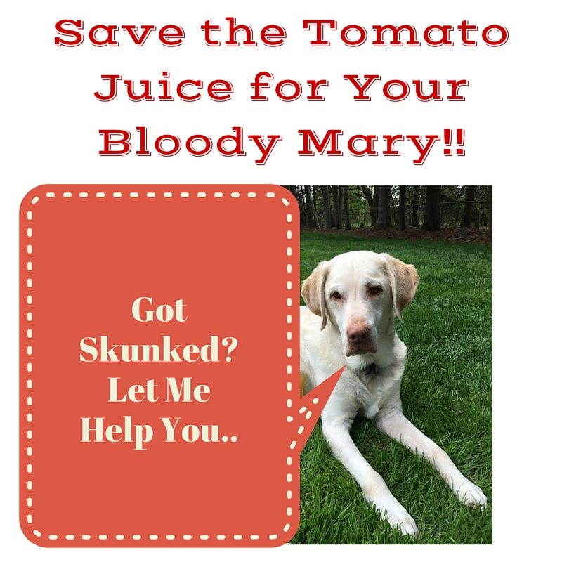 Has your Dog Been skunked? Save the Tomato Juice for Your Bloody Mary- How to de-skunk your dog, see how I do it
