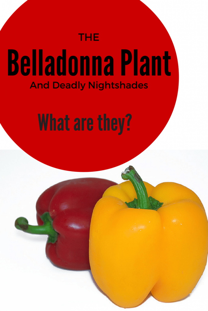 The Belladonna Plant and Deadly Nightshades, what is a nightshade, celiac disease and nightshades, and inflammation what is to blame?