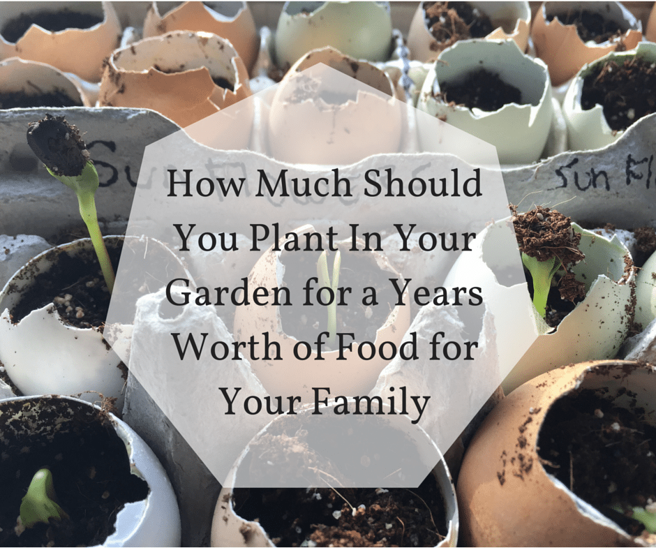 How Much Should You Plant In Your Garden for a Years Worth of Food for Your Family-2